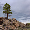 Lone Tree Under Overcast Skies