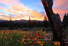 Shrine Pass sunrise<br /> Vail, Colorado
