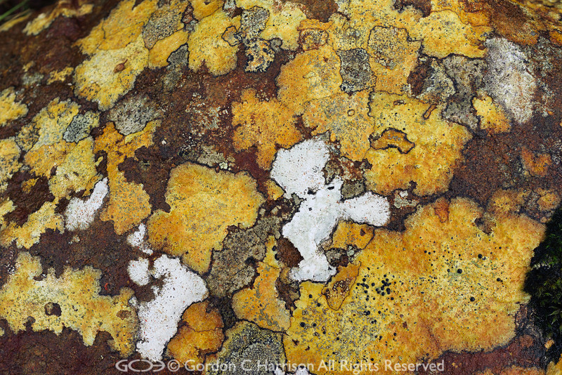 Photo 3201: Lichen Artwork Number 2