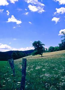Spring-Blue Ridge Parkway NC