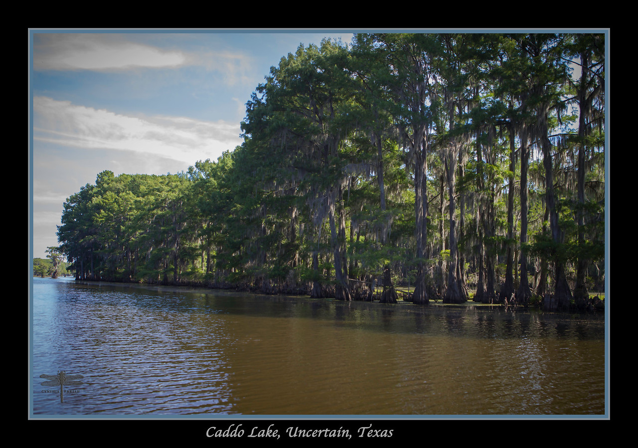 Caddo Lake, Uncertain, Texas