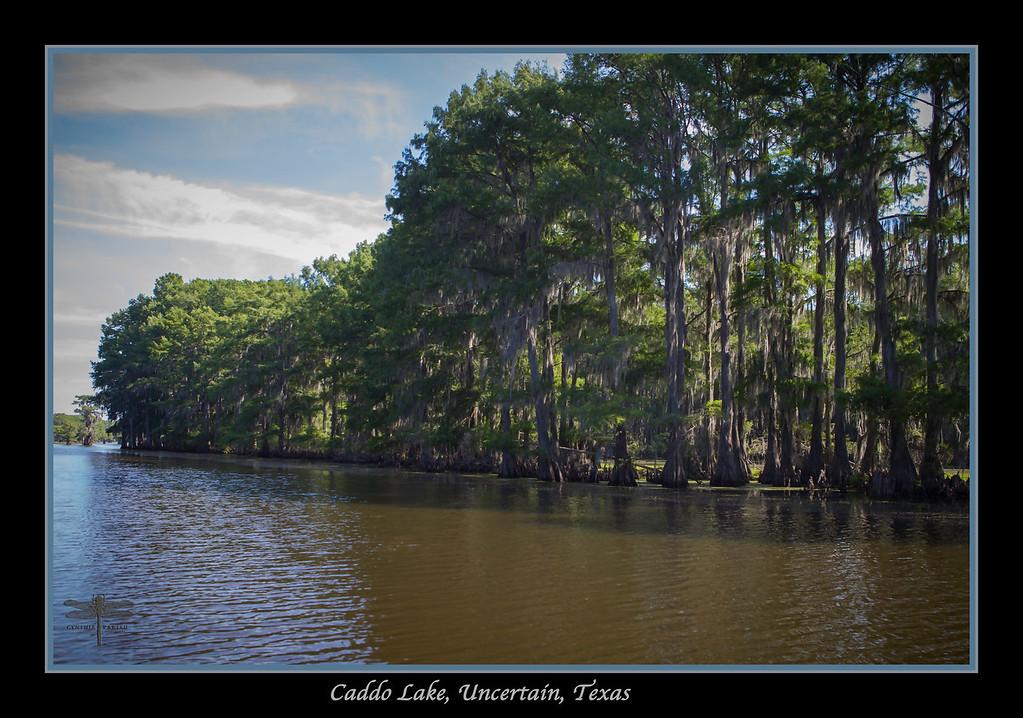 Caddo Lake, Uncertain, Texas