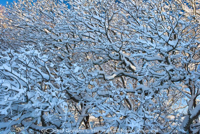 Photo 2609: Fractal Snow