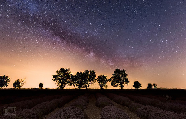 A night with lavenders