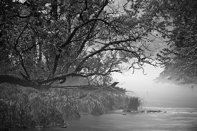 B&W Foggy Stream Bend