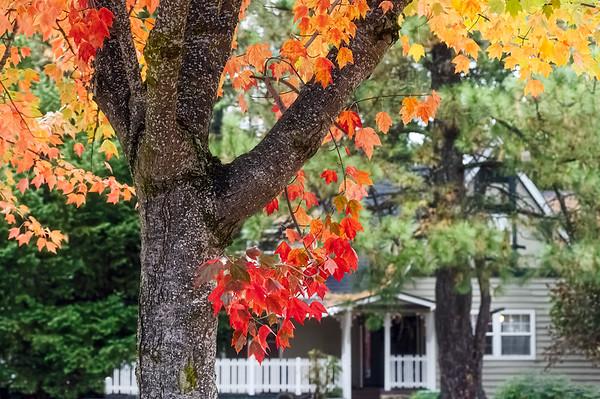 Autumn in Cedar Ridge