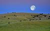 Moon Grazing
