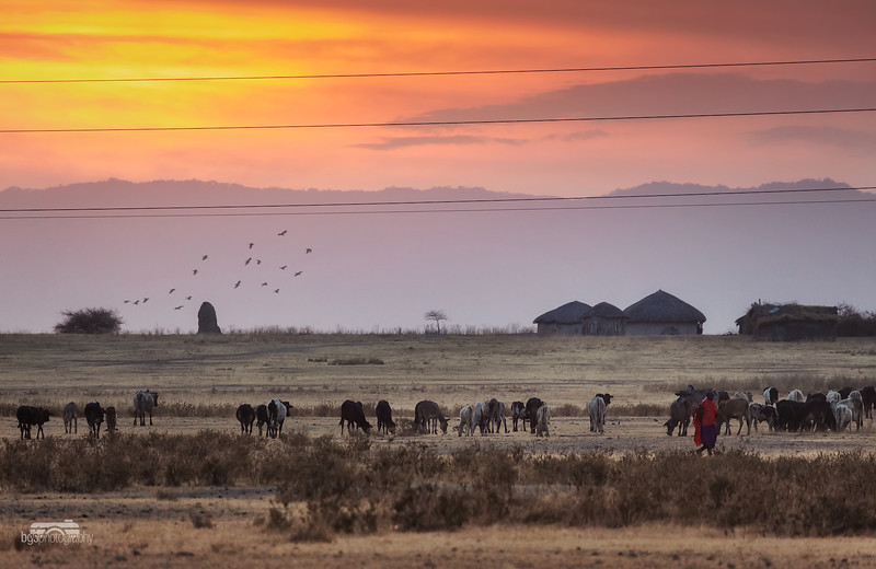 Maasai at work