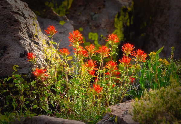 Summer Paintbrush