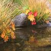 Autumn Indian Rhubarb
