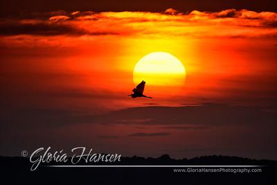 Egret-Sunset_GLO9613