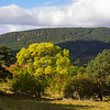 Start of Autumn colours. Aberdeenshire. John Chapman.