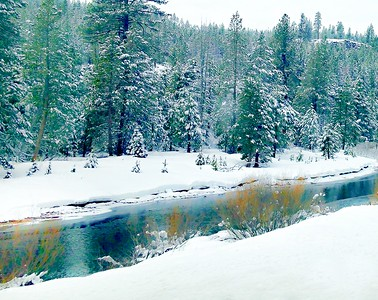 Truckee Riverbank