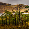 View from the Woodlands on to Loch Maree, Torridon, Highlands, Wester Ross, Scotland