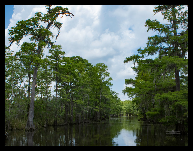 Ten Mile Bayou, Big Thicket, Orange County, Texas