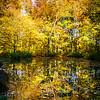 English Garden Munich in the Fall