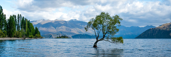 Lone Tree of Lake Wanaka, New Zealand