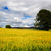 Strathdon. Barley Field. John Chapman.