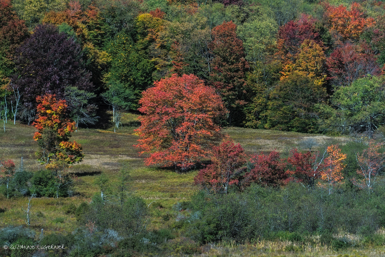 Autumn in the Canaan Valley