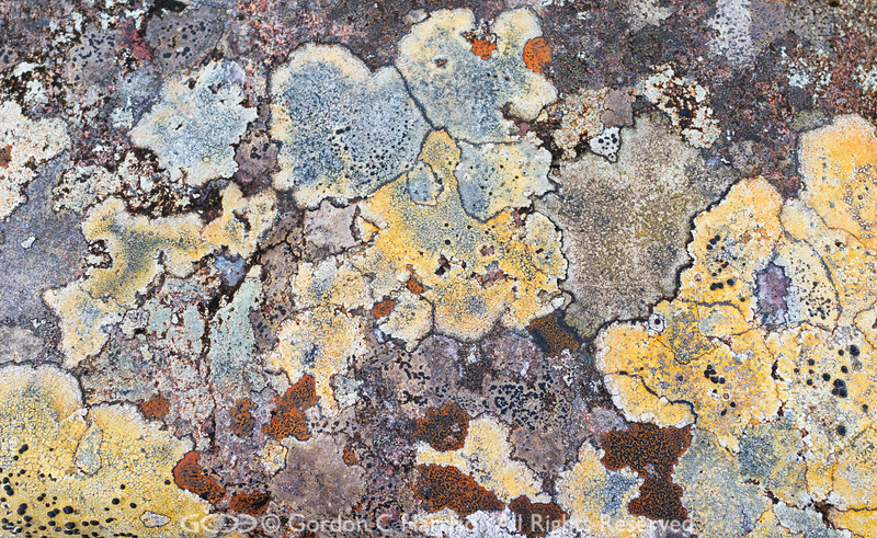 Photo 3205: Lichen Artwork Number 4