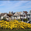 """The Painted Ladies"""