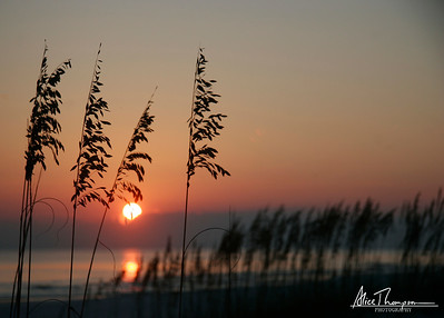 Sunset and Grass Silhouette
