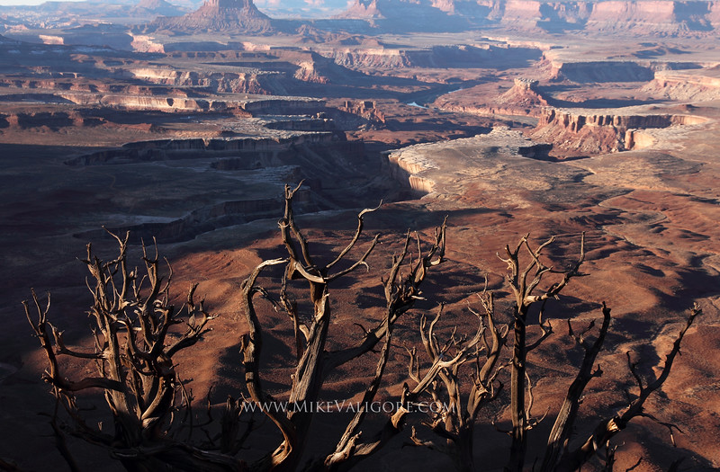 Canyonlands<br /> <br /> Stark and beautiful, this dead juniper tree creates the perfect foreground overlooking the Green River in Canyonlands National Park.