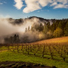 Pinots in the Mist || Willamette Valley, OR