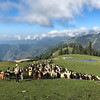 We slept by some shepherds who were spending the night outdoors with their sheep and goats