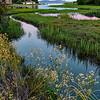 San Rafael Marsh
