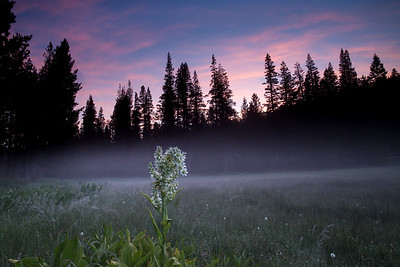 Jackson Meadow Sunrise