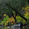 Autumn Morning on the Yuba River 1