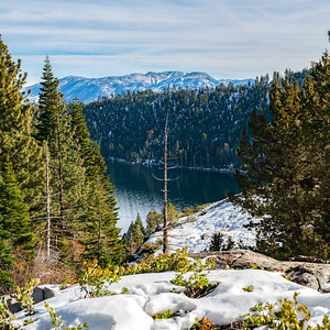 Image of a dead tree with Lake Tahoe and the Sierra Mountains in the background