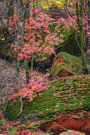 Autumn Leaves over Moss Covered Boulders