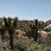 Desert Meets Mountain Peak
