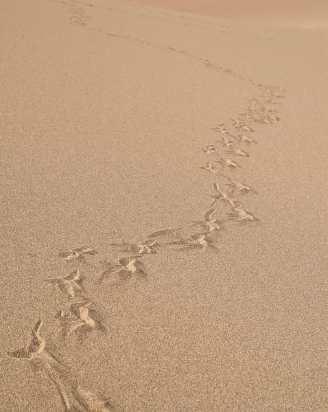 Prints in Sand