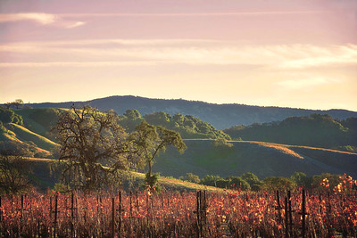 Napa, California Winter