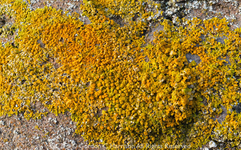 Photo 3203: Lichen Artwork Number 3