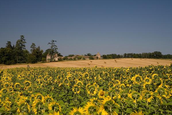 Sunflower field near Bonne-Nouvelle, SW France