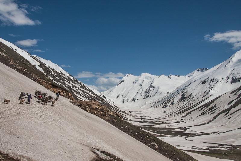 Nomadic Bakarwal families traveling to their summer pastures near Noori Top, Kaghan