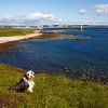 Buddy, at the Bay of Nigg. Aberdeen. John Chapman.