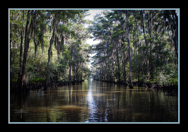 Government Ditch, Caddo Lake, Uncertain, Texas