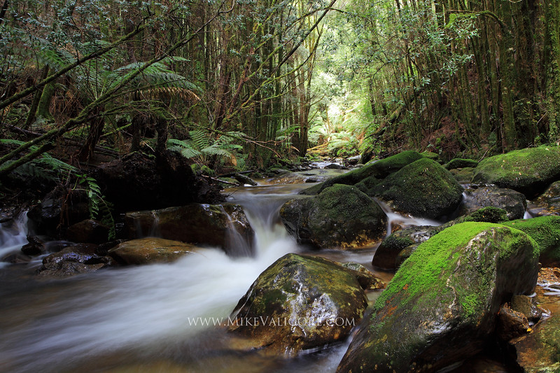 Montezuma Falls Wilderness<br /> West Coast, Tasmania<br /> <br /> This is one of the many streams criss-crossing the state forest on the hike to Montezuma Falls.  I love the way in which the wet, mossy rocks reflect the subdued afternoon lighting in the rainforest.  It might be my favorite photo I took in Tasmania.