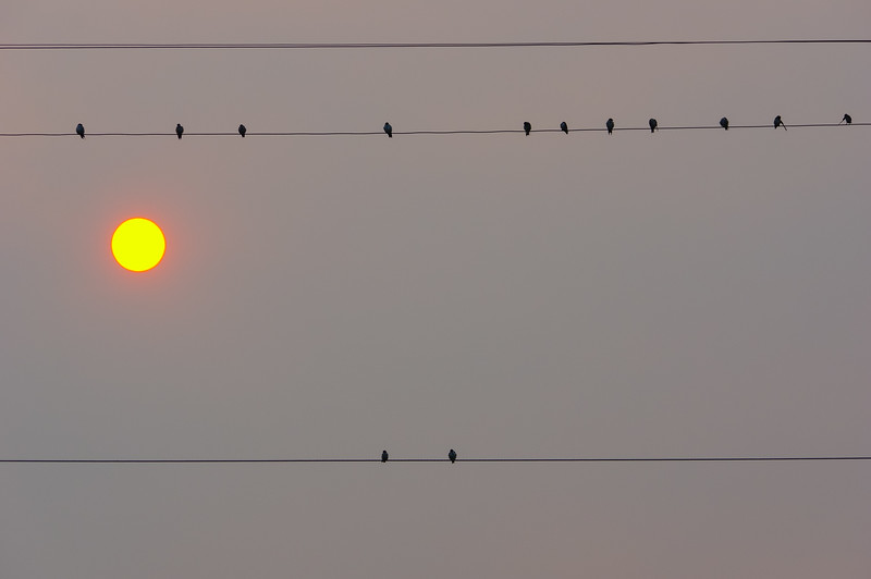 Birds on Wire with sun through smoke, Lake Chelan, WA
