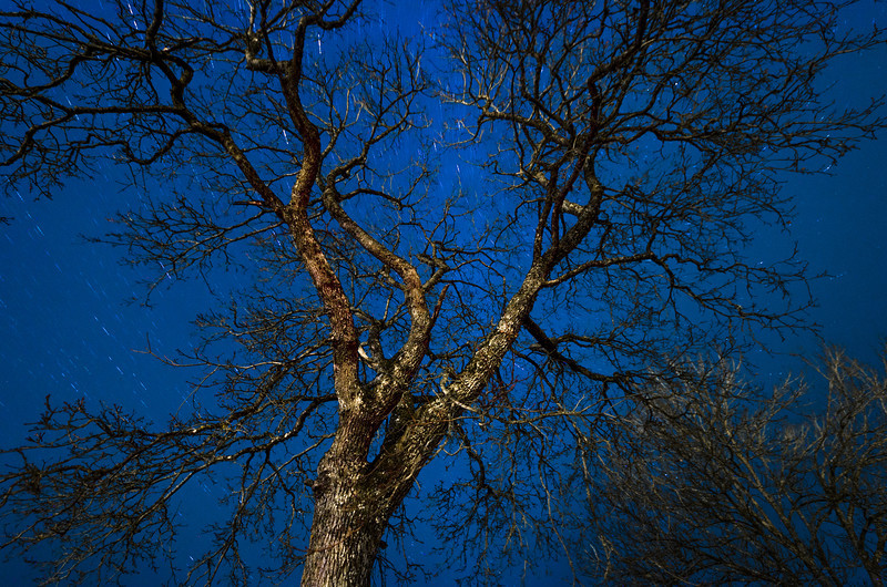 Tree against the night sky in Småland, Sweden.