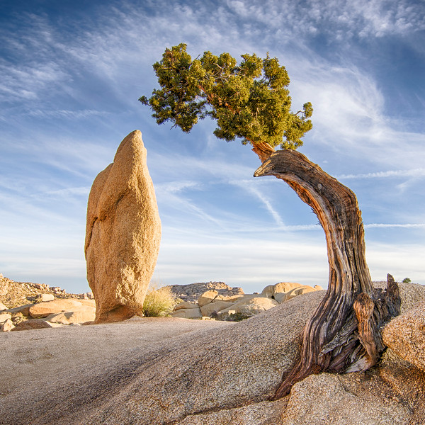 Juniper and Rock