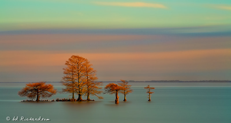 Cypress Trees in the Lake