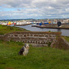 Buddy at the Torry Battery with Aberdeen City Behind. John Chapman