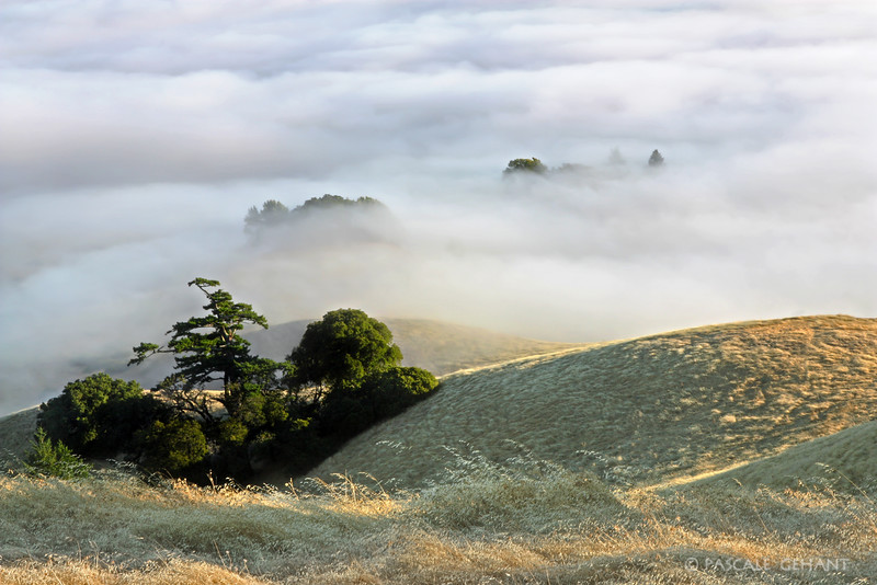 Summer fog over the hills