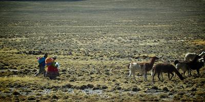 Tending the Llama